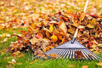 cleaning_leaves