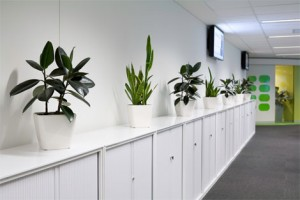 services for office cleaning